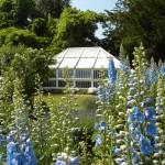 Homepage - Spencers garden DSC05658